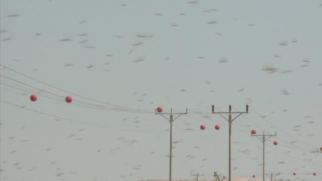 cual plaga biblica millones de langostas provenientes de egipto se apoderan de la franja de gaza israel y jordania voiced una plaga biblica on march... - biblical event stock videos & royalty-free footage
