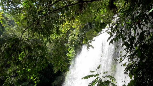 cuba eco turismo: el nicho in escambray montagne - eco tourism video stock e b–roll