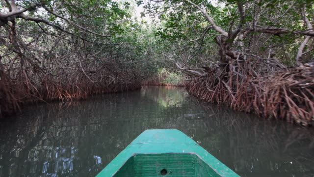 Cuba eco tourism in beautiful unknown places: boating below red mangrove in waterways around the Zaza river, Tunas de Zaza, Sancti Spiritus