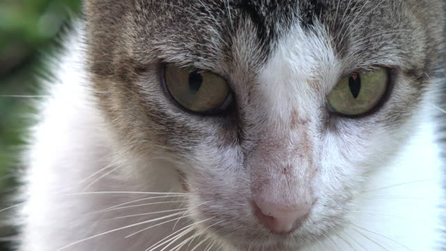 cuba: face of a cute domestic cat - green eyes stock videos and b-roll footage
