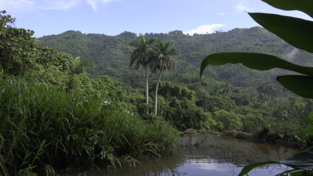 cuba tourism: beauty in nature at 'el nicho' natural reserve in the 'escambray' mountain range used for eco-tourism in the province of sancti spiritus. - sancti spiritus province stock videos and b-roll footage