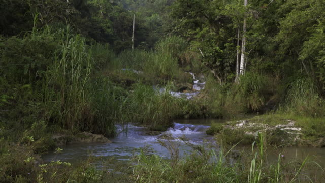 cuba tourism: 'el nicho' beauty in nature at the popular natural reserve in the 'escambray' mountain range used for eco-tourism in the province of sancti spiritus - eco tourism stock videos & royalty-free footage