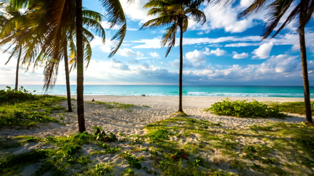 cuba: travel : steadicam shot of tropical beach with palm trees in varadero - cuba video stock e b–roll