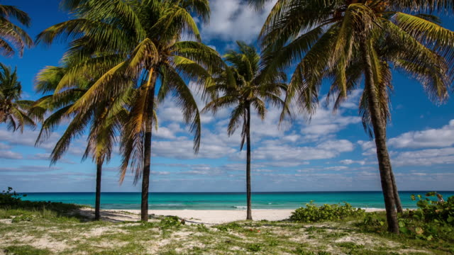cuba - tropical beach with palm trees in varadero - caribbean sea stock videos & royalty-free footage