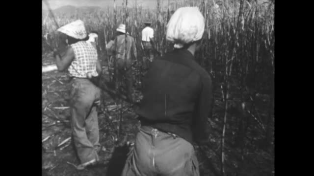 economic issues since the beginning of the cuban revolution regular people cutting sugar cane for sugar production historic footage of the first... - 1959 stock videos & royalty-free footage