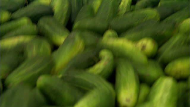 cucumbers bounce along in a large container. - cucumber stock videos & royalty-free footage