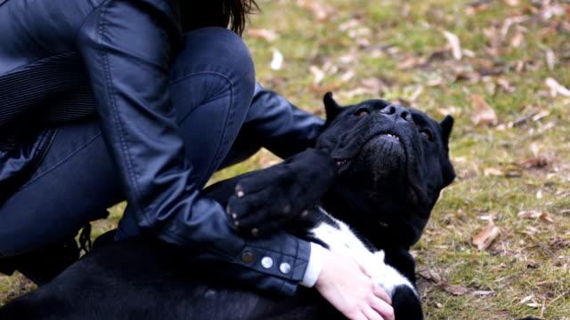 vidéos et rushes de câlins avec cane corso dog - femme soumise