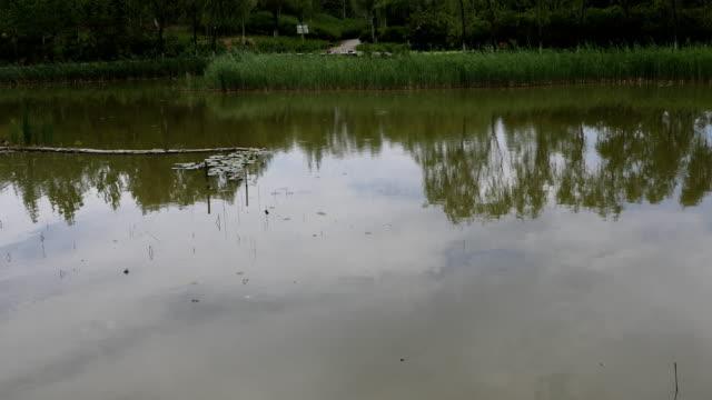 vídeos y material grabado en eventos de stock de cuihu national urban wetland park, beijing - embarcación de pasajeros