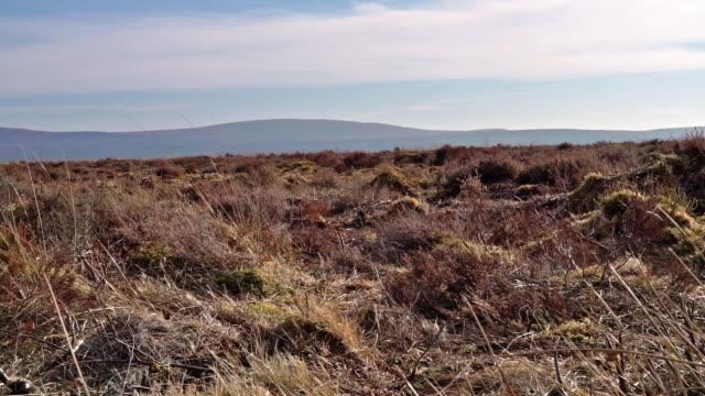 culloden battlefield, drumossie moor, inverness - civil war stock videos & royalty-free footage