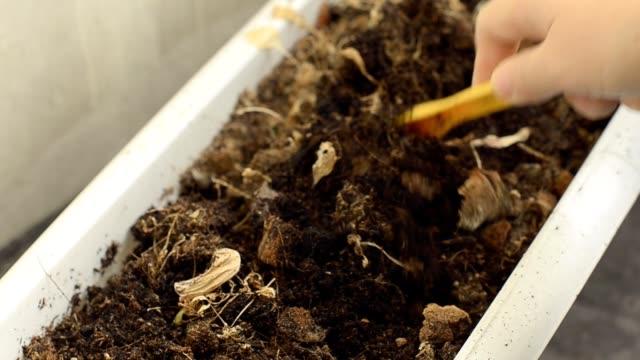 cultivate soil