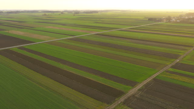 AERIAL Cultivated fields in the morning