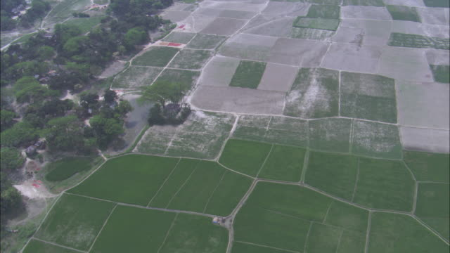cultivated fields line the ganges river. available in hd. - bangladeshi culture stock videos & royalty-free footage