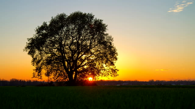 HD MOTION TIME-LAPSE: Cultivated Land At Sunset