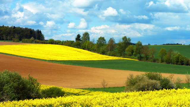Cultivated Land In Springtime