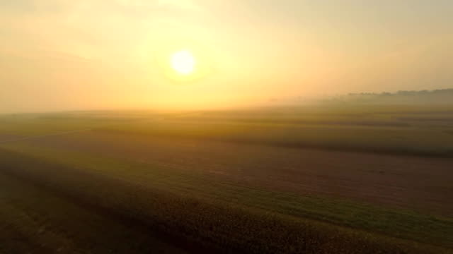 aerial agrarland in the fog - multikopter stock-videos und b-roll-filmmaterial
