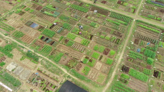 cultivated land of weekend farm / ansan-si, gyeonggi-do, south korea - gardening stock videos & royalty-free footage