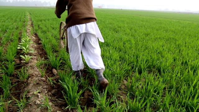 coltivazione di terra per aumentare la taglia - dhoti video stock e b–roll