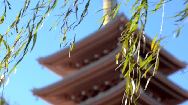 cultural temple in autumn - shinto stock videos & royalty-free footage
