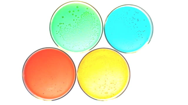 cultures in lab - petri dish stock videos and b-roll footage
