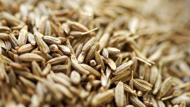vídeos de stock e filmes b-roll de cumin seed. - herbs