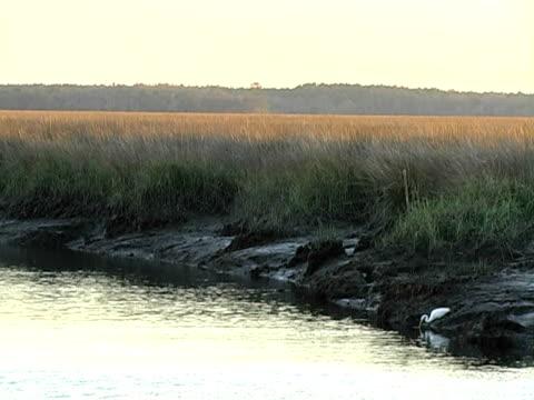 cunoncreek - low tide stock videos & royalty-free footage