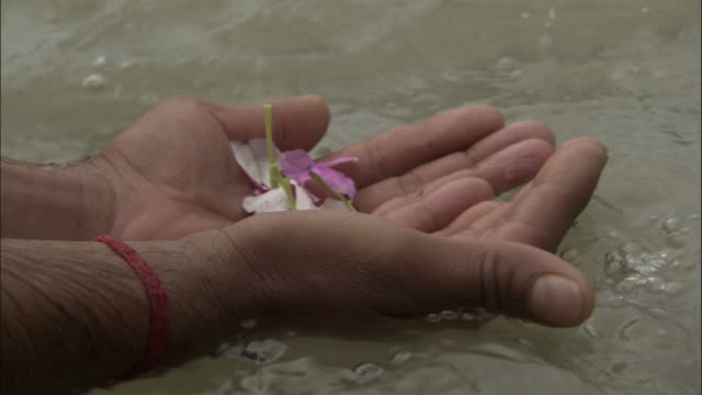 Cupped hands lower flower petals into Ganges, Devprayag, India Available in HD.