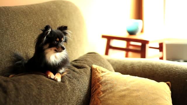curiosity killed the dog - kudde dekor bildbanksvideor och videomaterial från bakom kulisserna