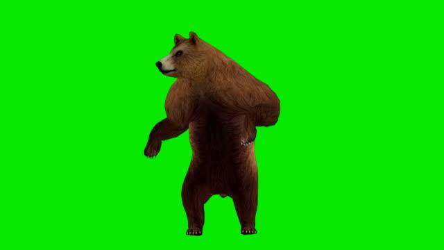 vídeos y material grabado en eventos de stock de curiosa oso de pantalla verde (en bucle - garra