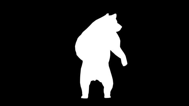 vídeos y material grabado en eventos de stock de curioso bear (en bucle) - pata com garras