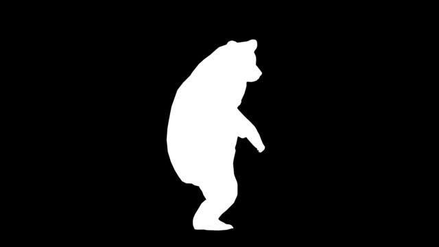 curioso bear (loop) - contorno forma video stock e b–roll