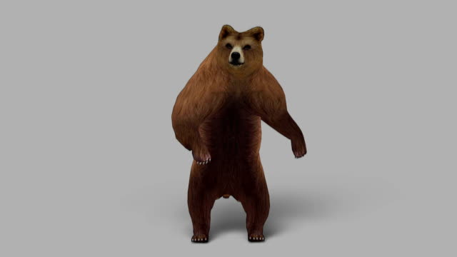 Curious Bear with Alpha Channel (Loopable)