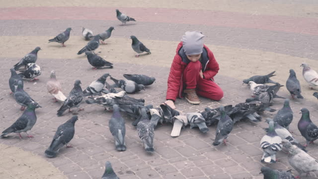 Curious boy sitting and feeding pigeons from the hand