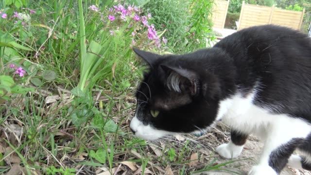 vídeos y material grabado en eventos de stock de caza de gato curioso en el jardín - animales acechando