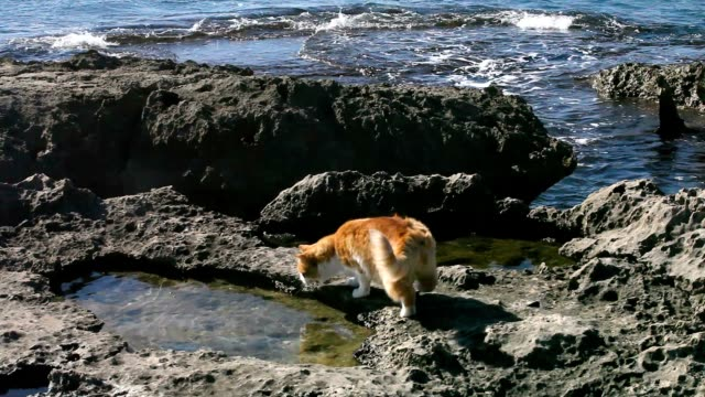 Curious cat is playing on the rocks.