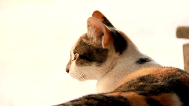vidéos et rushes de chat curieux - partie du corps d'un animal