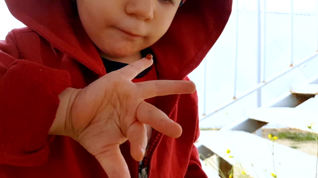 curious child looking at the ladybug on his hand - curiosity stock videos & royalty-free footage