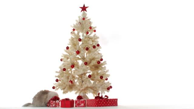 curious christmas cat - 10 sekunder eller längre bildbanksvideor och videomaterial från bakom kulisserna