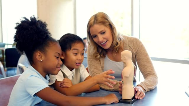 curious elementary schoolgirls learn about the human body in biology class - female anatomy stock videos and b-roll footage