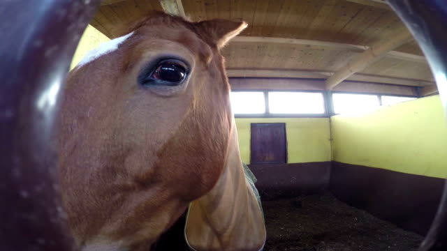 Curious Horse playing with camera