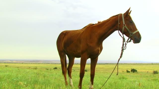 Neugierig Horse