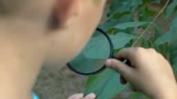 Curious kid looking at tree leaf through magnifying glass, botanical research