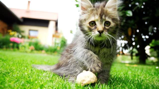 hd super slow-mo: curious kitten in the grass - aggression stock videos & royalty-free footage