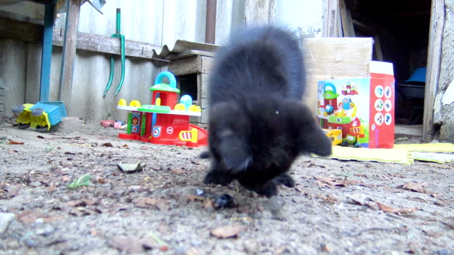 vídeos de stock e filmes b-roll de curious kitten sniffing and playing with beetle - felino