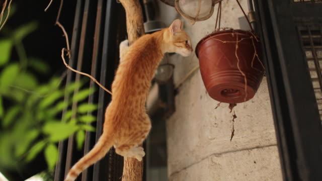 Neugierige Katzenjunges