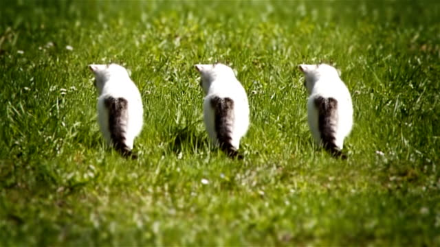 stockvideo's en b-roll-footage met curious kittens in the grass - drie dieren