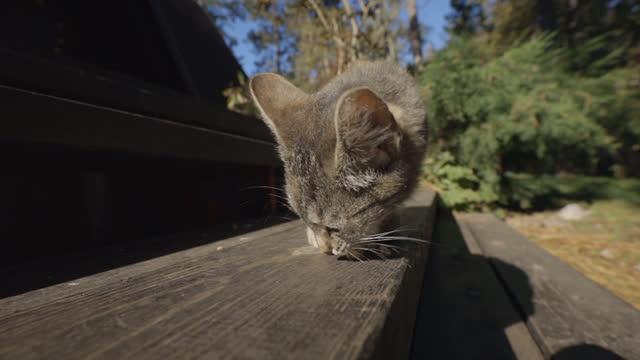 晴れた日にポーチの階段を歩く好奇心旺盛な小さな猫 - ショートヘア種の猫点の映像素材/bロール