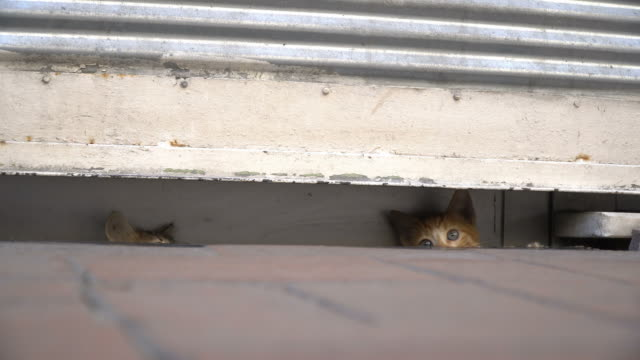 興味津 々 の子猫が、舗装で非表示