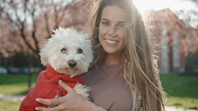 nyfiken maltesisk hund, njuter av den blåsiga dagen med sin fashionabla kvinnliga ägare - knähund bildbanksvideor och videomaterial från bakom kulisserna
