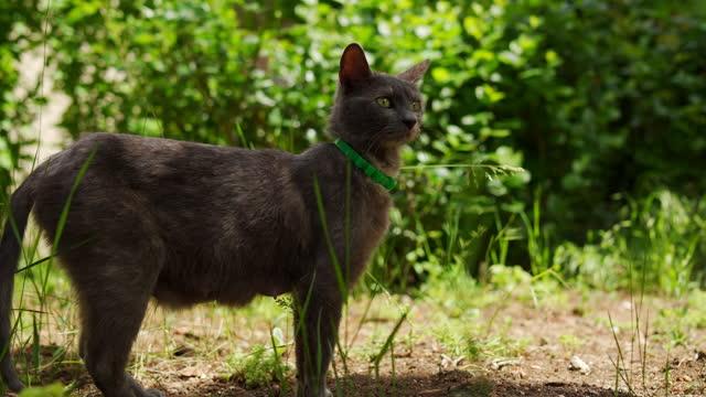 vídeos de stock, filmes e b-roll de curioso gato mestiço observando a natureza ao redor do hime - domestic animals