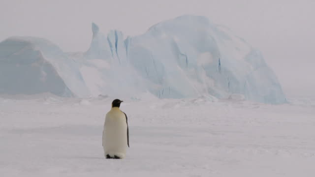 curious penguin - remote location stock videos & royalty-free footage